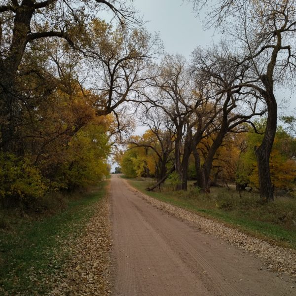 fall foliage on a dirt road