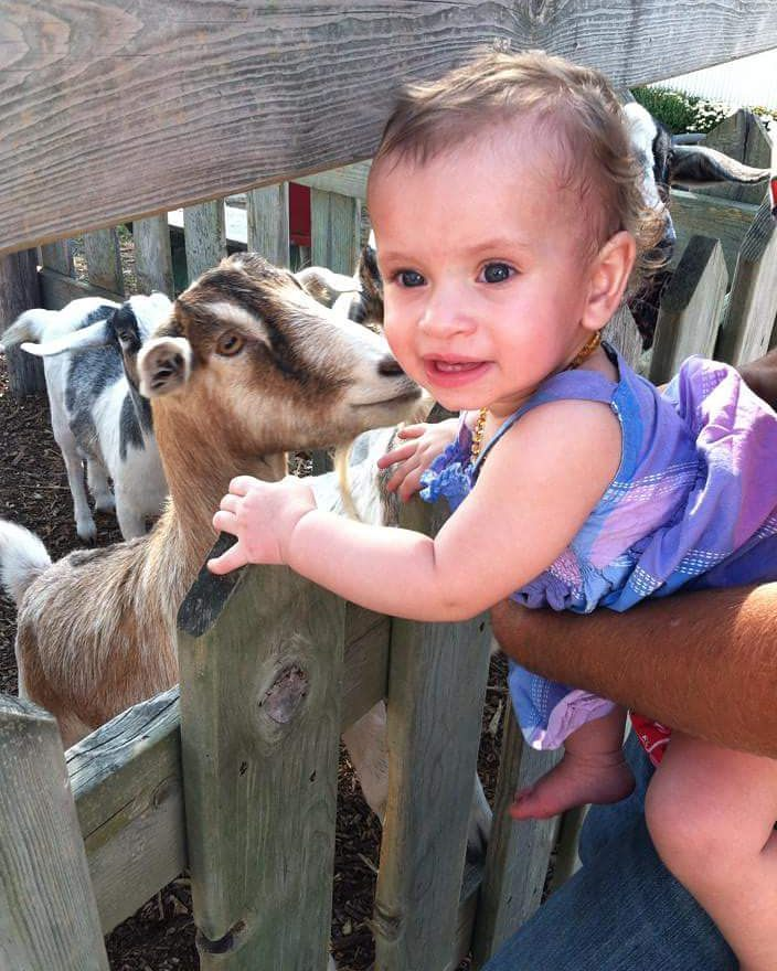 goat and little girl next to fence