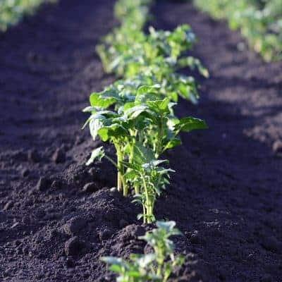 Permaculture Basics