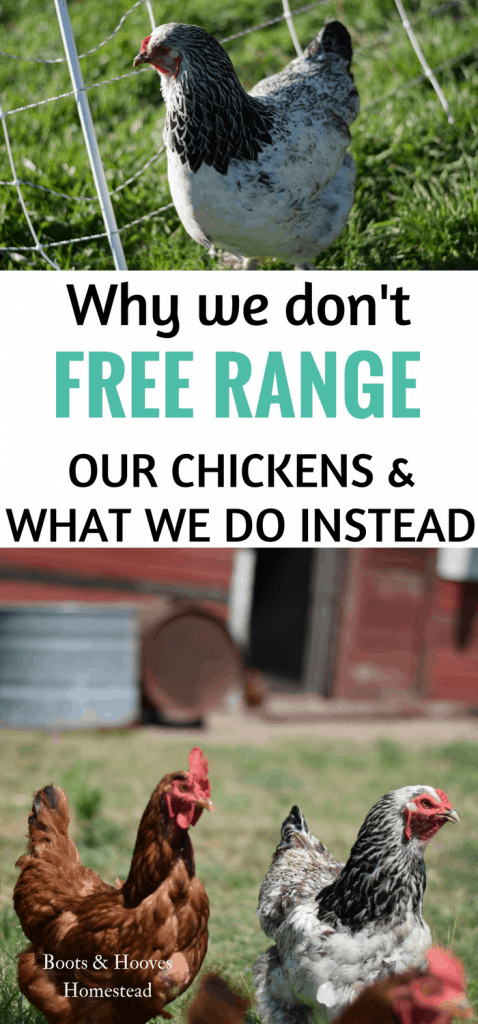 why we no longer free range our chickens