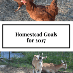 Homestead Goals for 2017