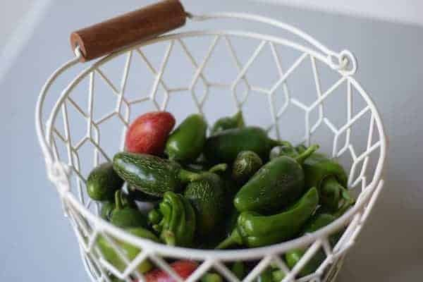 white wire basket filled with jalapeño peppers freshly harvested from the garden