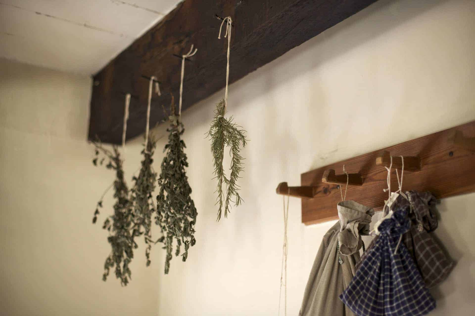 drying herbs hanging from ceiling