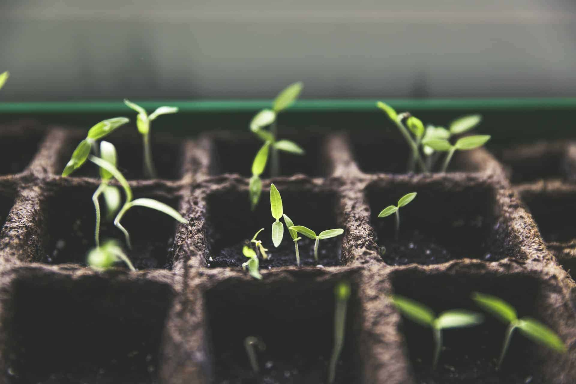 Motivated to Grow Our Own Food