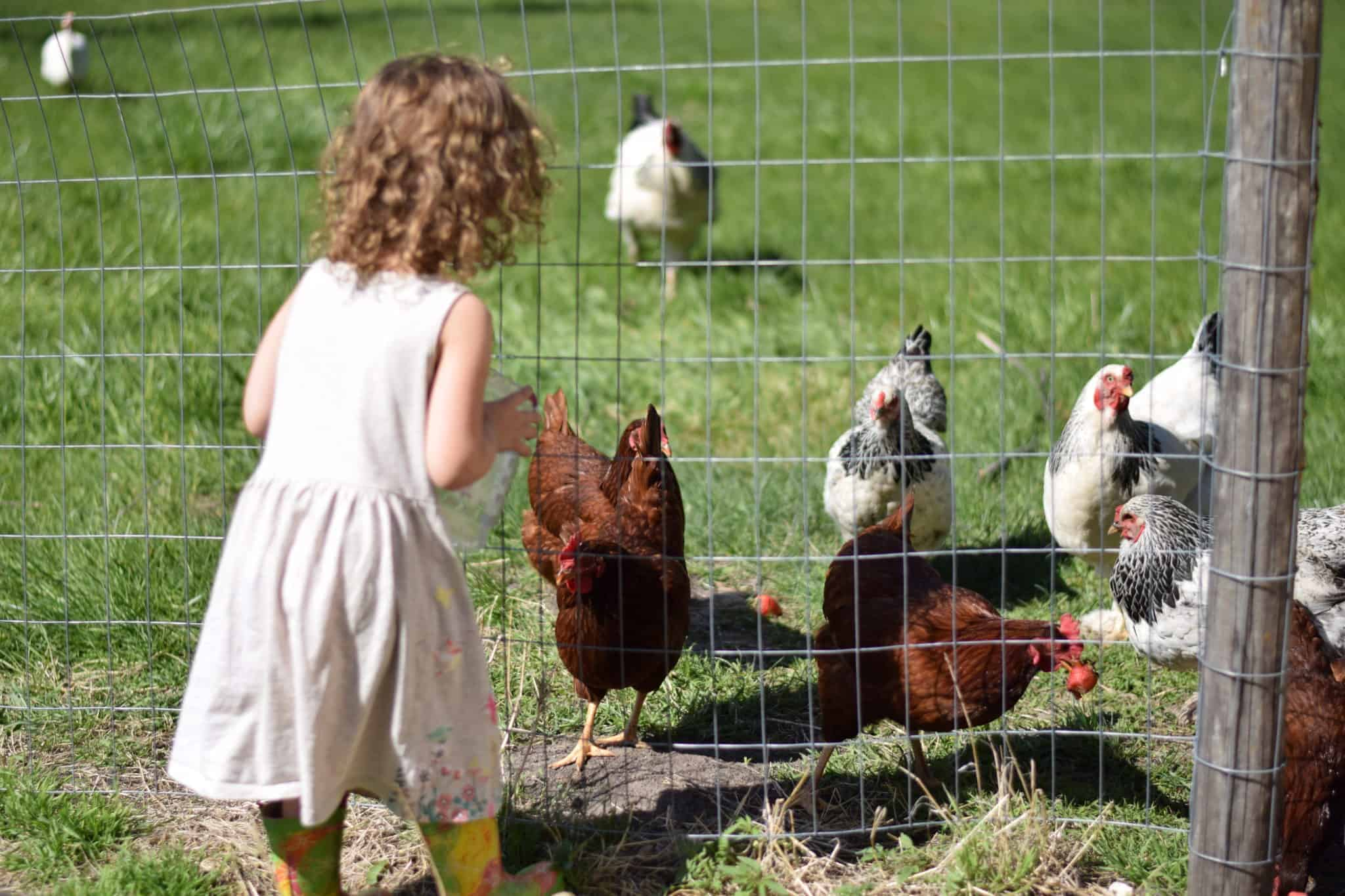 little girl feeding chickens, living without tv