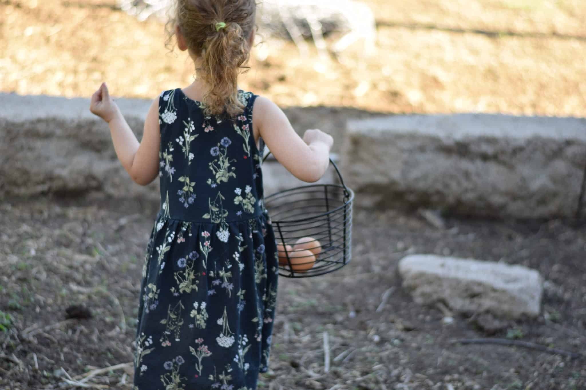 little girl collecting eggs from the chickens in a black wire basket
