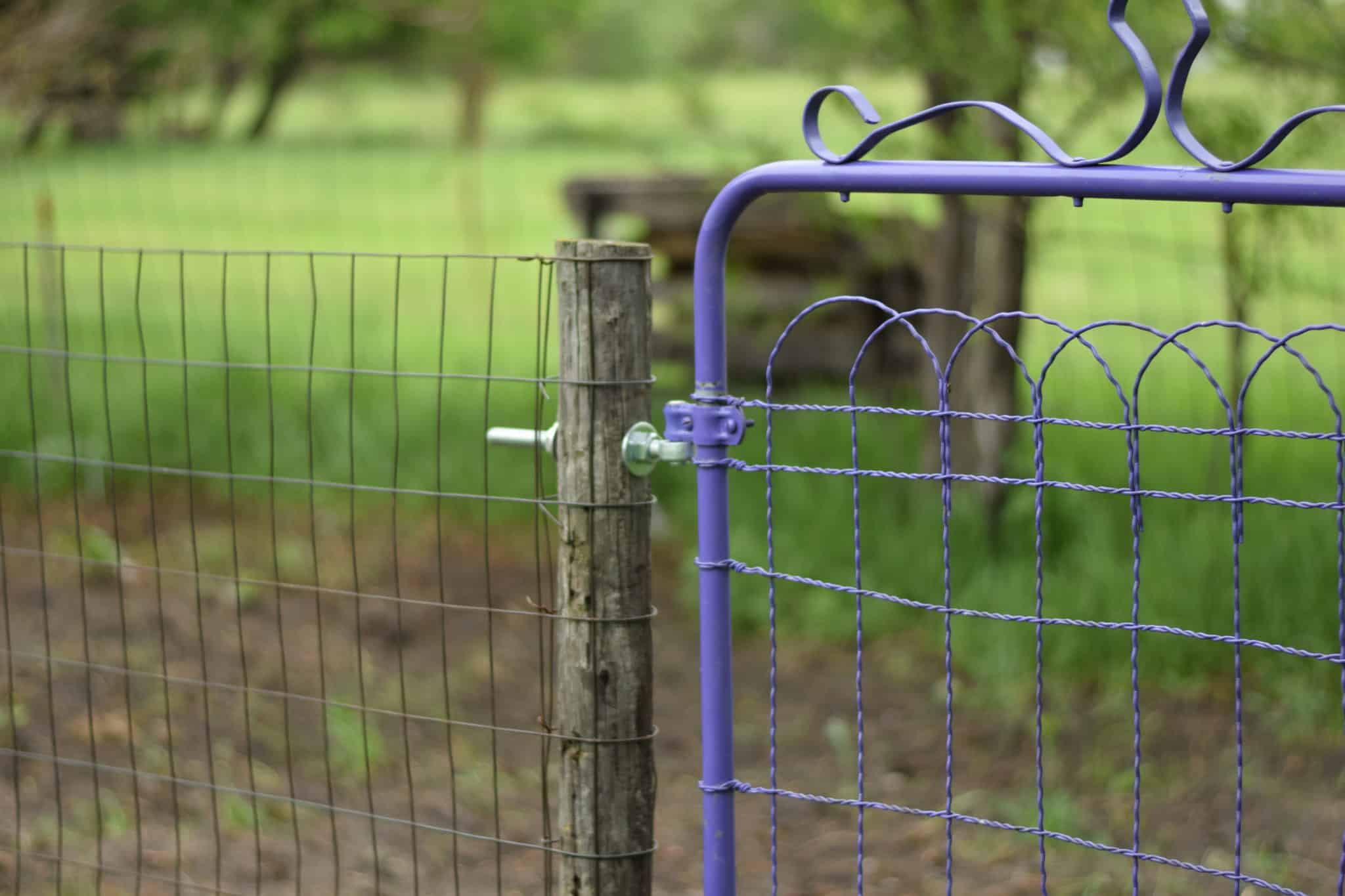 purple garden gate and fence