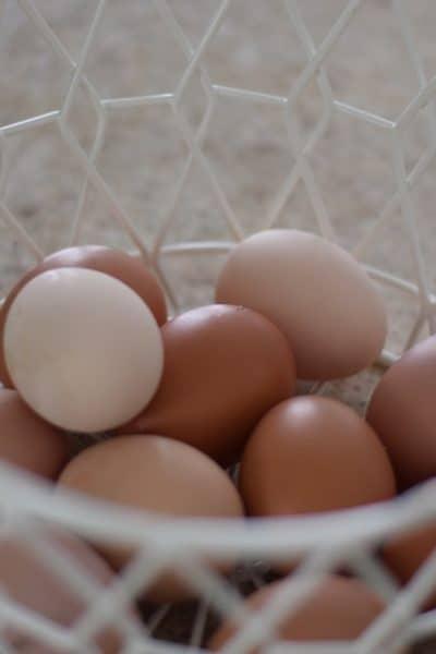 farm fresh eggs in an egg basket