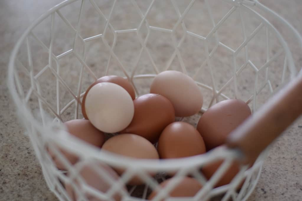 farm fresh eggs in a white egg basket