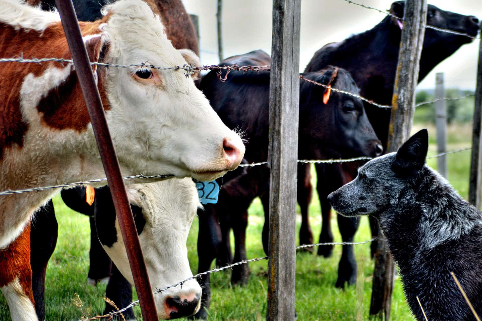 How to Put Your Homestead Animals to Work