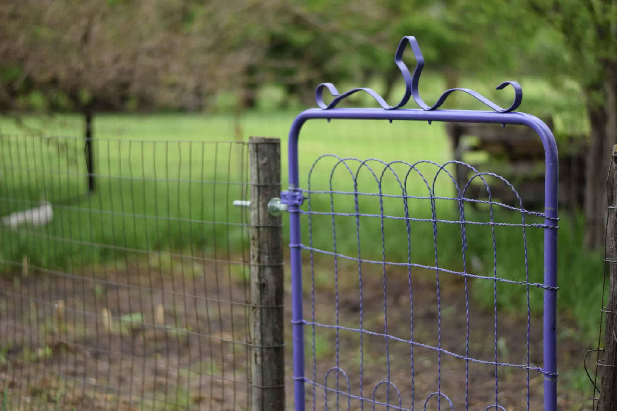purple garden gate with garden in the background