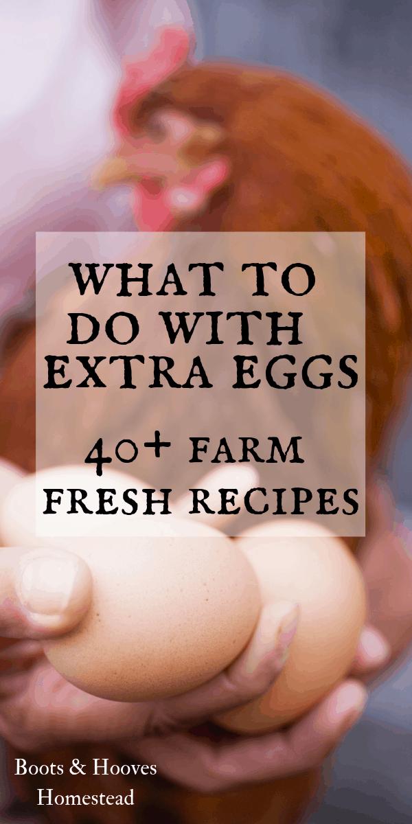 farm fresh eggs and Rhode Island red chicken