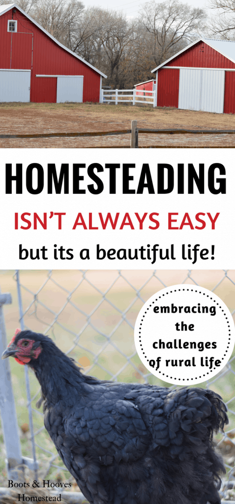 Embracing the challenges of homesteading and the rural life. This homestead life ins't always easy.