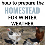 how to prepare the homestead for winter weather.