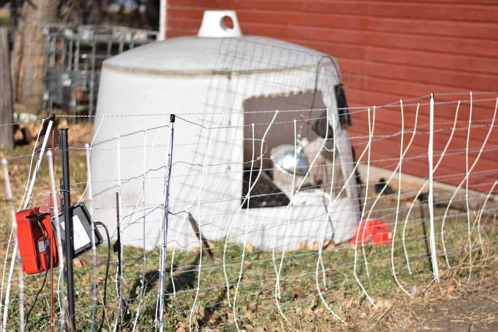 temporary chicken shelter with electric fence