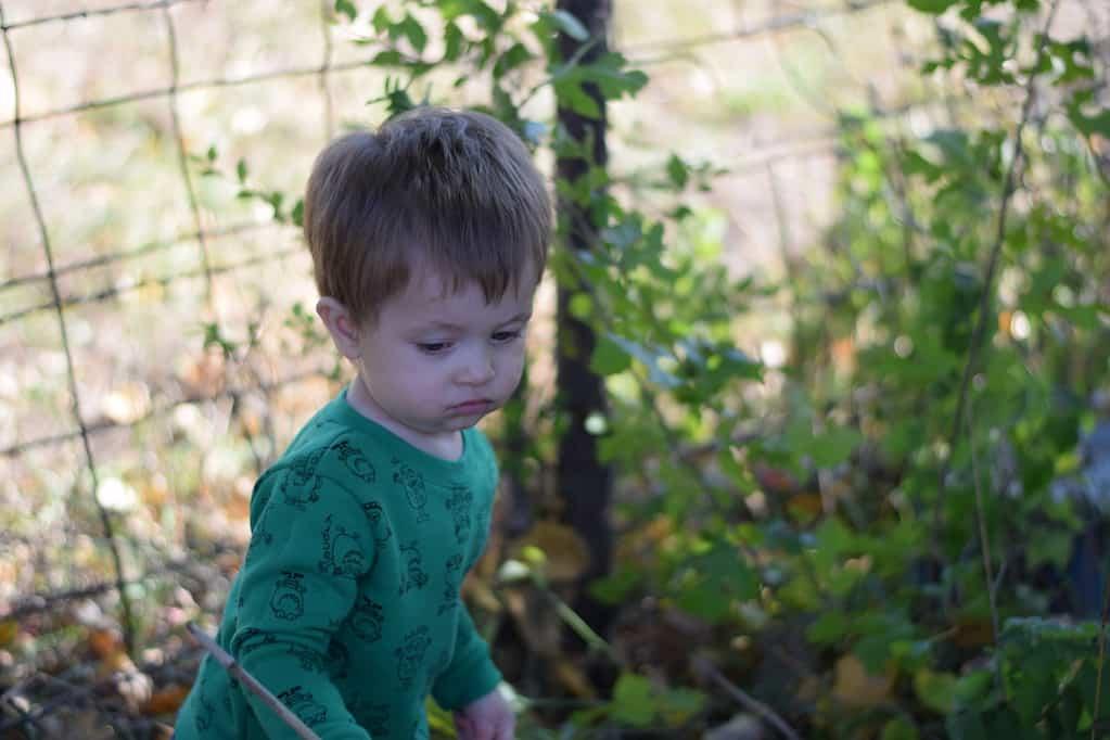 little boy helping in the garden
