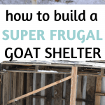 goat shelter outdoors
