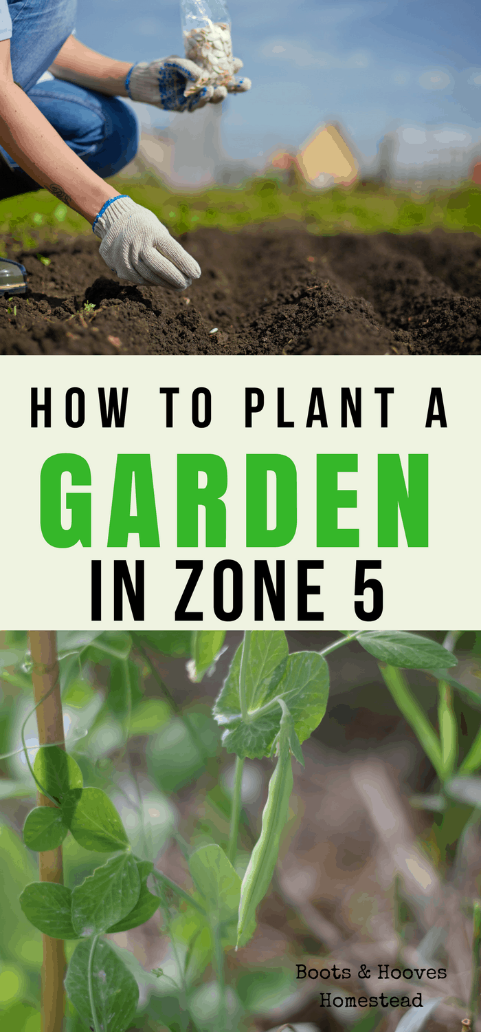 how to plant a garden in zone 5-2