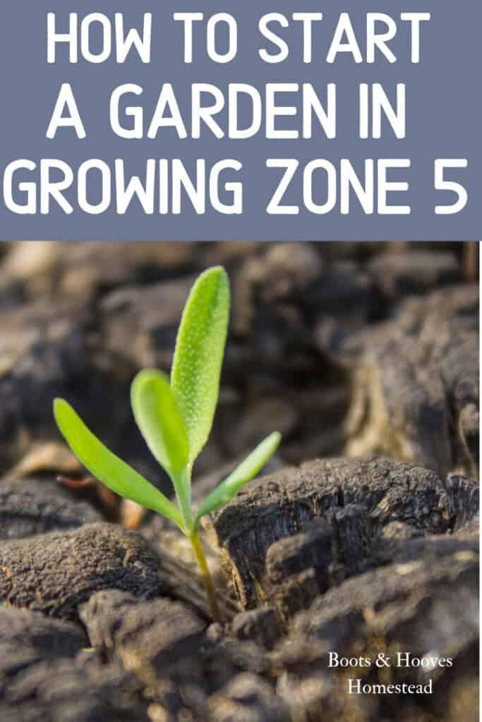 how to start a garden in zone 5