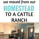 we moved our small homestead to a cattle ranch.