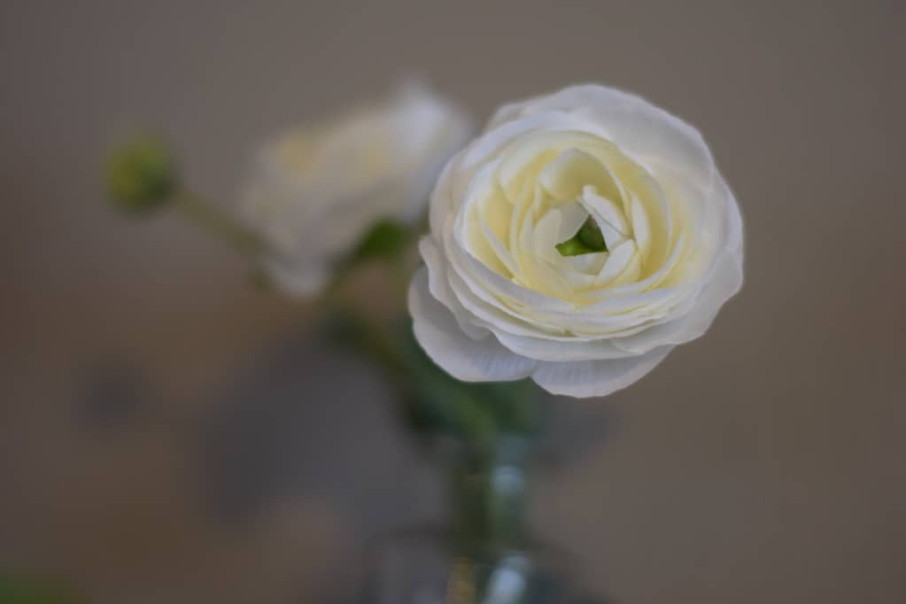 close up view of the white rose Decor for a Farmhouse Spring Mantel