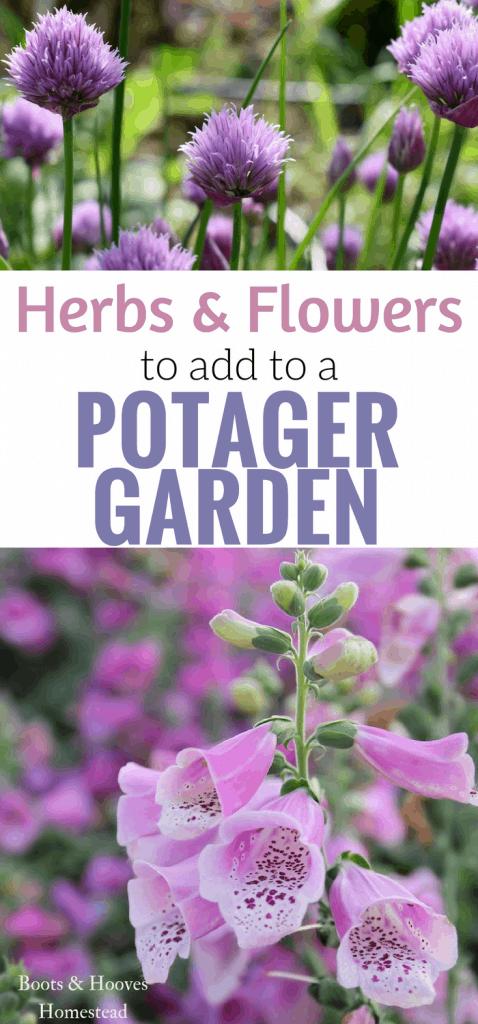Herbs & flowers for a potager garden.