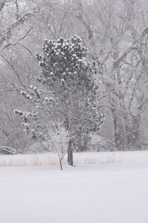 tree covered in snow during a blizzard