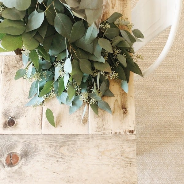 fresh eucalyptus bundles