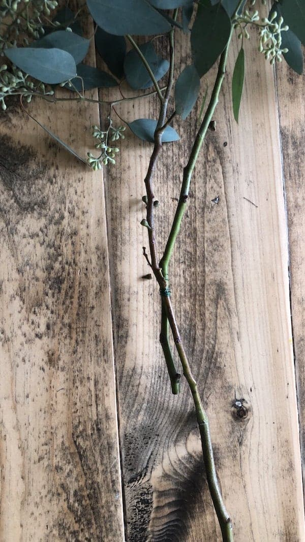 two branches of eucalyptus tied together with floral wire