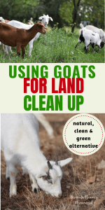 photo collage of goats eating brush and clearing up land