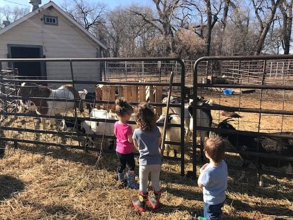 Children visiting goats in a pen