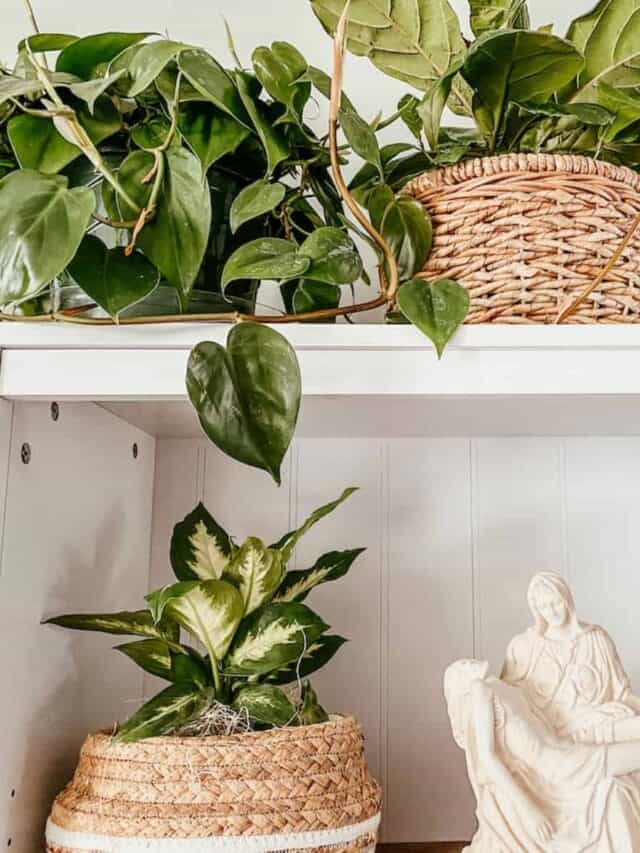 baskets of houseplants on a white bookshelf