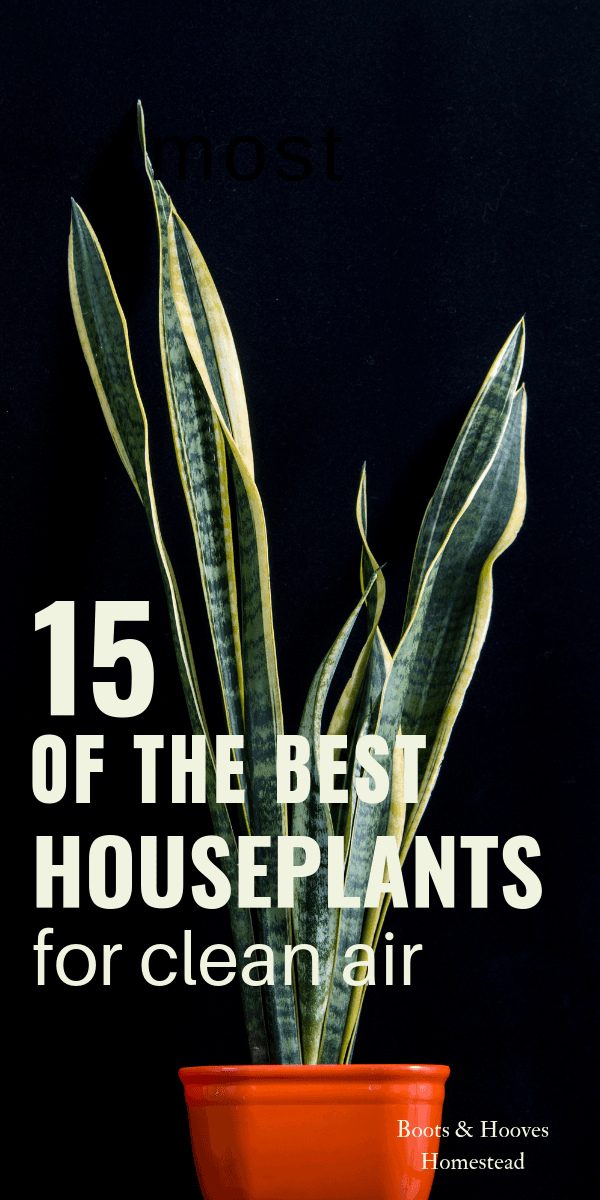 image of a snake plant in an orange pot. with text overlay that reads: 15 of the best houseplants for clean air.