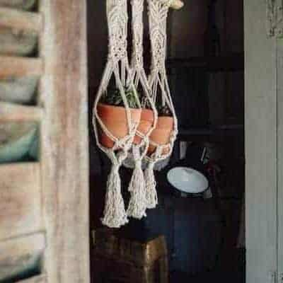 set of three plants in terra cotta planters and hanging with white macrame hanging plant holders