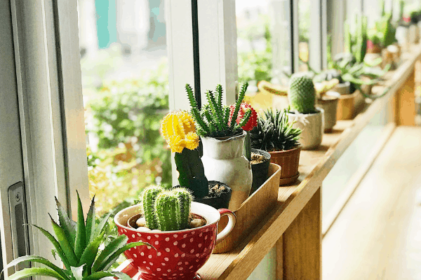 several small succulents and cacti plants in mini pots and displayed in a window