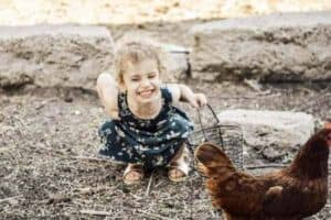 little girl collecting chicken eggs