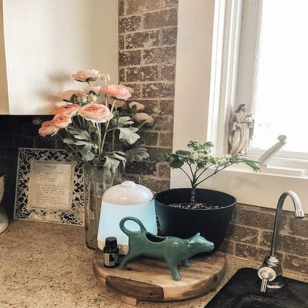 How to Clean the Air in Your Home (Naturally)