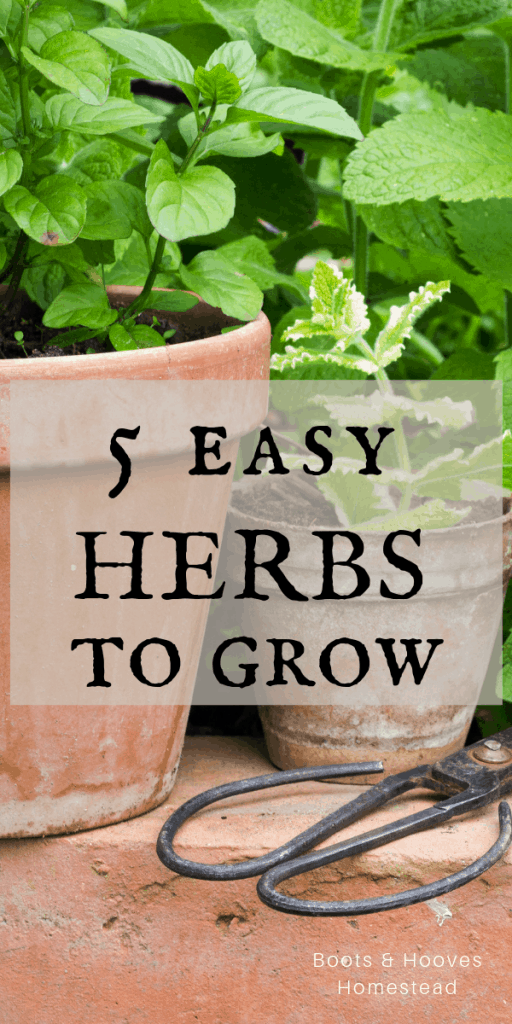 herbs in planters