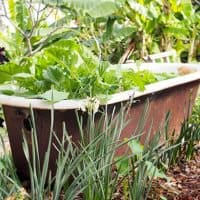 Vintage Clawfoot Turned Bathtub Planter