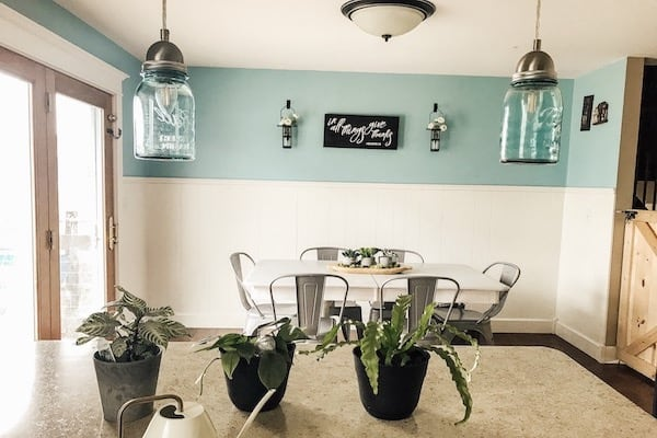 plants on countertop