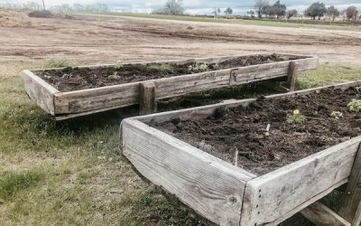 Creative Upcycled Planter Ideas