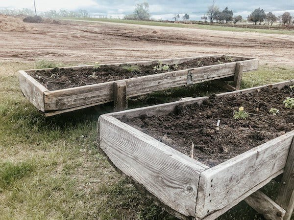 cattle feed bunks filled with soil and herb plants