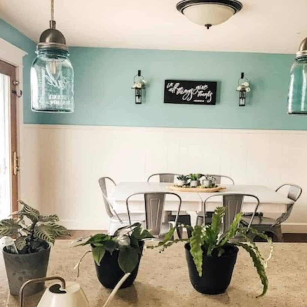 3 houseplants on kitchen countertop with white watering can