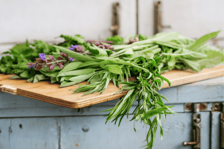 harvesting herbs from the garden