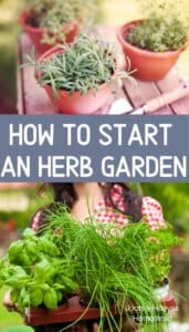 herb gardening in containers