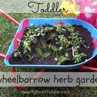 Gardening with kids - Wheelbarrow herb garden