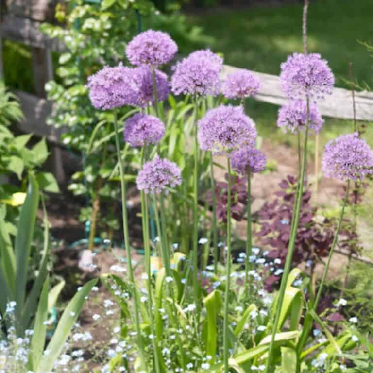 herb garden with chive plants