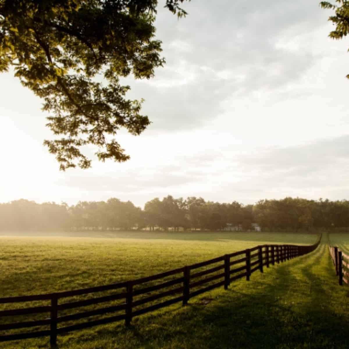 homestead pasture view