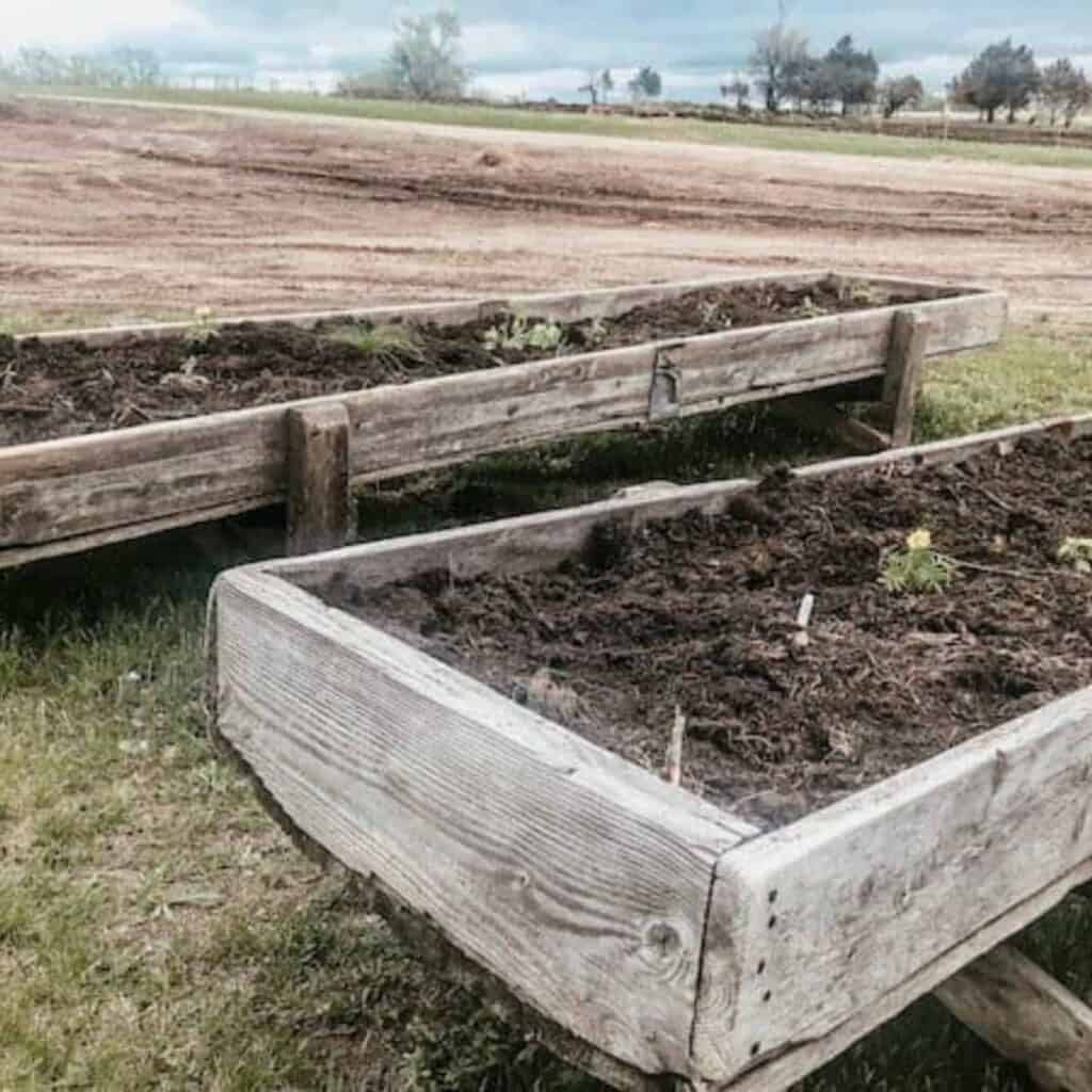 raised garden bed planters from old cattle feed bunks