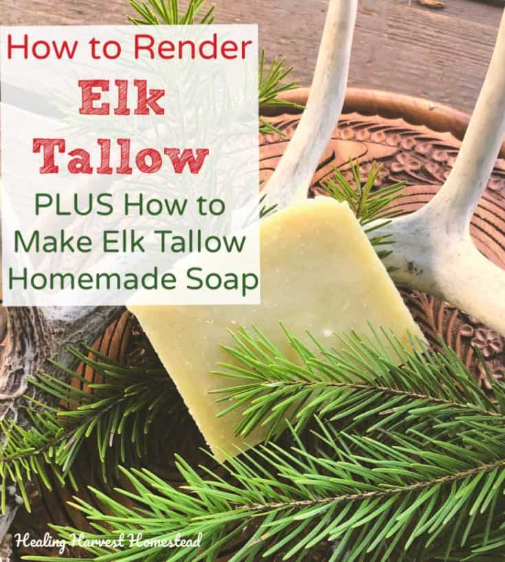 How to Make Elk Tallow and Use It to Make Homemade Elk Tallow Soap